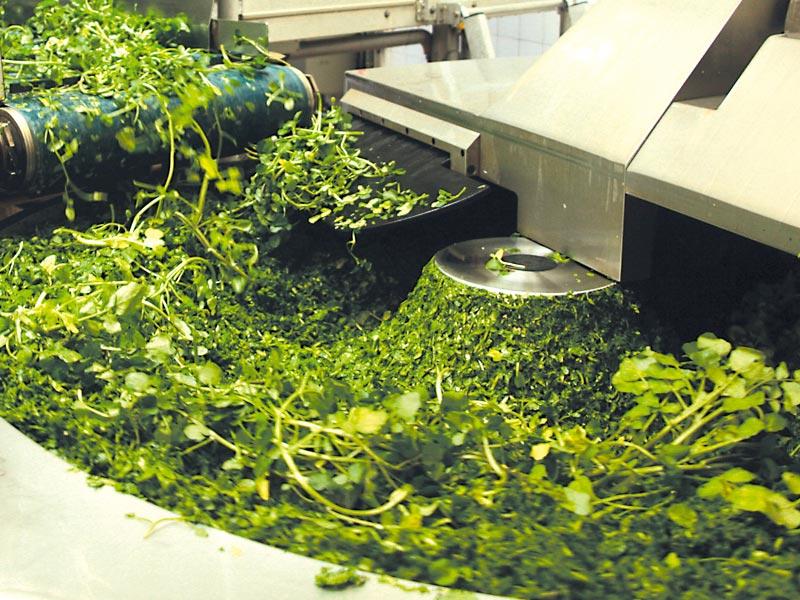 Kräuter werden in einer Maschine gehäckselt für Das grüne Salz Bio-Kräutersalz