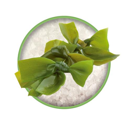 Braunalge Kelp als natürliche Jodquelle in Das grüne Salz. Bio-Kräutersalz