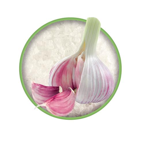 Knoblauch Bio-Kräutersalz Das grüne Salz