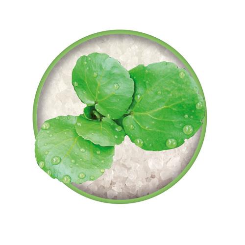 Brunnenkresse Zutat vom Bio-Kräutersalz Das grüne Salz