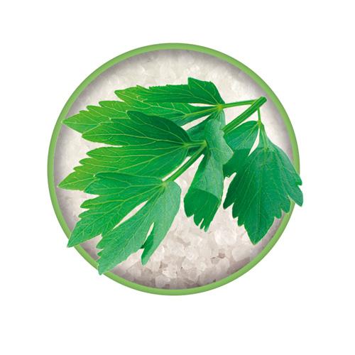 Liebstöckl Zutat vom Bio-Kräutersalz Das grüne Salz