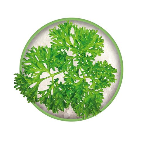 Petersilie Zutat vom Bio-Kräutersalz Das grüne Salz